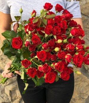 Букет из двухцветных красных  кустовых роз (25 шт) #158