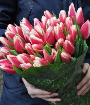 Букет из двухцветных тюльпанов (51 шт) #907