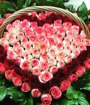 Корзина из 101 розы-микс #1139