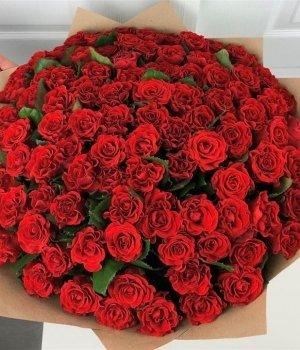 Букет из 101 красной розы Эль Торро (50 см) #1540