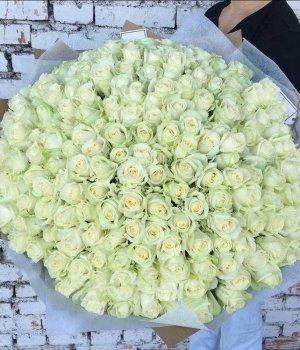 Букет из 201 белой розы (70см) #621